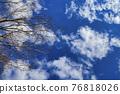 겨울, 하늘, 고목 76818026