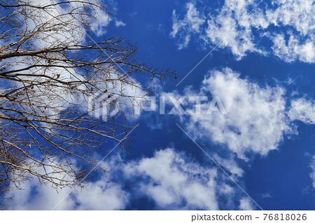 겨울 맑은 하늘과 고목의 협업 76818026