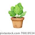 植物 植物學 植物的 76819534