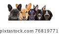 row of many dogs 76819771
