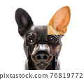 abstract puzzle dog head 76819772