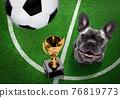soccer player dog 76819773