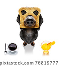 breakfast toast dog early in the morning 76819777