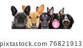 row of many dogs 76821913