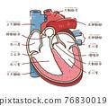心 心臟的 五臟六腑 76830019