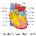 心 心臟的 五臟六腑 76830020