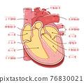 心 心臟的 五臟六腑 76830021