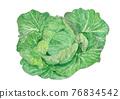甘藍 包菜 椰菜 76834542