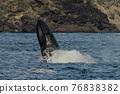 世界遺產 座頭鯨 鯨魚 76838382