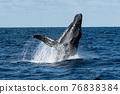 座頭鯨 鯨魚 海 76838384