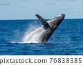 座頭鯨 鯨魚 海 76838385