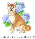 柴犬 叢林犬 毛孩 76839919