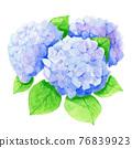 繡球花 花朵 花 76839923