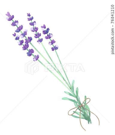 lavander, lavender, watercolour 76841210
