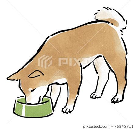 dog, dogs, Shiba 76845711