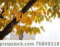 maple, Maple, autumn 76849318