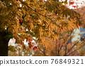 Autumn maple 76849321