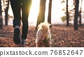 hiker feet walking the dog in the park forest. travel concept. close-up of a leg man walking with journey a dog in the park in the forest. pet dog walk concept. hiker sneakers walking close-up park 76852647