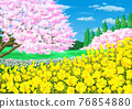 Landscape with rape flowers and cherry blossoms 76854880