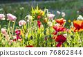 bloom, blossom, blossoms 76862844