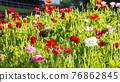bloom, blossom, blossoms 76862845