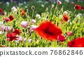 bloom, blossom, blossoms 76862846