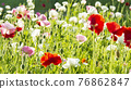 bloom, blossom, blossoms 76862847