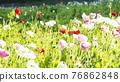 bloom, blossom, blossoms 76862848