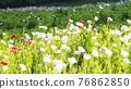 bloom, blossom, blossoms 76862850