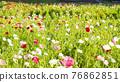 bloom, blossom, blossoms 76862851