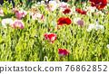 bloom, blossom, blossoms 76862852