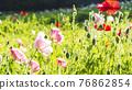 bloom, blossom, blossoms 76862854