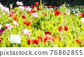 bloom, blossom, blossoms 76862855