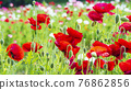 bloom, blossom, blossoms 76862856