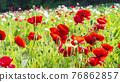 bloom, blossom, blossoms 76862857