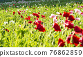 bloom, blossom, blossoms 76862859