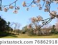 春天 春 花朵 76862918