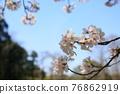 春天 春 花朵 76862919