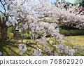 春天 春 花朵 76862920