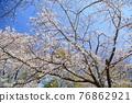 春天 春 花朵 76862921