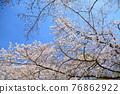 春天 春 花朵 76862922