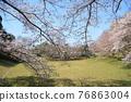 春天 春 花朵 76863004