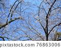春天 春 花朵 76863006