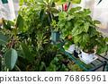 葉子植物 76865961
