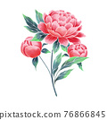 Garden peony. Watercolor style, hand painted illustration 76866845