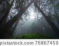 Misty forest in rainy season. 76867459