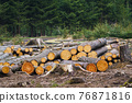 Pile of wood. A view of huge stacks of logs. 76871816
