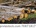 Pile of wood. A view of huge stacks of logs. 76871817
