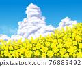 rape, rape blossoms, Thunderhead 76885492
