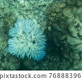 View of coral bleaching 76888396